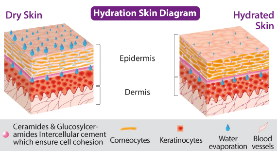 Dry Skin Cell Diagram All Kind Of Wiring Diagrams